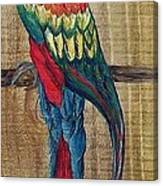 Parrot - Scarlet Macaw Canvas Print