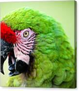 Parrot Canvas Print