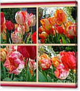 Parrot Tulips In Springtime Philadelphia Canvas Print