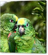 Parrot Whispers Canvas Print