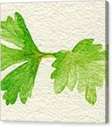 Parsley Canvas Print