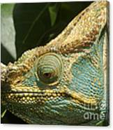 Parsons Chameleon From Madagascar 12 Canvas Print