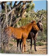 Partners - Wild Horses Canvas Print