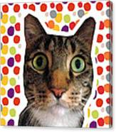 Party Animal - Smaller Cat With Confetti Canvas Print