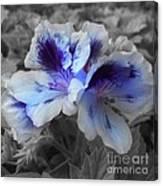 Pasion Blue Canvas Print