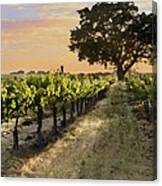 Paso Vineyard  Canvas Print