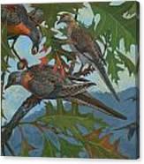 Passenger Pigeon Canvas Print