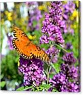 Passion Butterfly Canvas Print