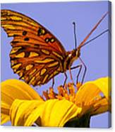 Passion Butterfly On The Mexican Sunflower Canvas Print