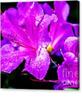Passion Of Purple Canvas Print