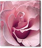 Passion Pink Rose Flower Canvas Print