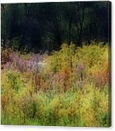 Pastel Field Canvas Print