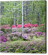Pastel Forest Canvas Print