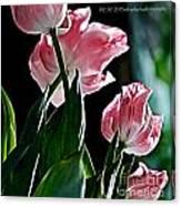 Pastel Petals Canvas Print