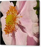 Pastel Pink Mallow Canvas Print