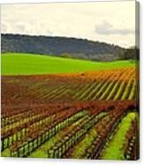 Pastoral Vineyards Of Asti Canvas Print