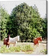 Pasture For Three Canvas Print