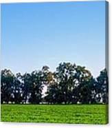 Pasture Tree Line Summer 15798 Canvas Print