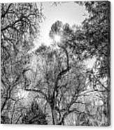 Patagonia Bw 4 Canvas Print