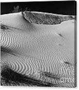 Patches In The Dunes Canvas Print