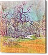 Path 3 Canvas Print