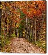 Path In A Fall Woods Canvas Print