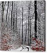 Path In A Forest In Winter In The Countryside  In Denmark Canvas Print