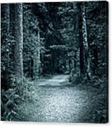 Path In Night Forest Canvas Print