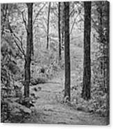 Path In The Foggy Forest Canvas Print