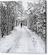Path In The Snow In Winter In Denmark Canvas Print
