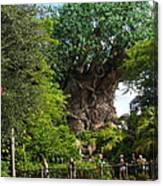 Path Leading To Tree Of Life Canvas Print