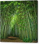 Path Through Bamboo Forest E139 Canvas Print