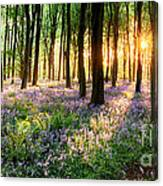 Sunrise Path Through Bluebell Woods Canvas Print