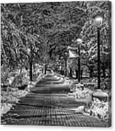 Path Through Eastern Canvas Print