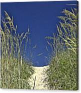 Path Through The Dunes Canvas Print