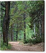 Path Through The Pines - Casper Mountain - Casper Wyoming Canvas Print