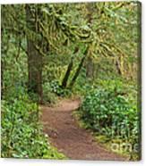 Path Through The Rainforest Canvas Print