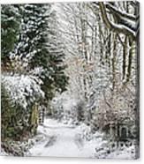 Path Through The Snow Canvas Print