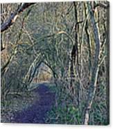 Path Through The Woods Canvas Print