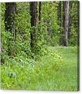 Path To The Green Forest Canvas Print