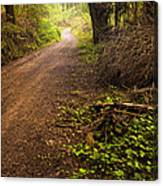 Pathway In The Woods Canvas Print