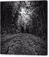 Pathway Through A Bamboo Forest Maui Hawaii Canvas Print