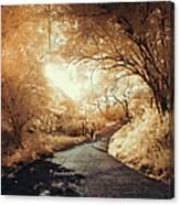 Pathway To Wonderland Canvas Print