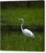 Patience - Egret Canvas Print