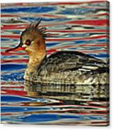 Patriotic Merganser Canvas Print