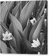 Pattern Of Flowers And Leaves - Monochrome Canvas Print