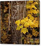 Patterns Of Fall Canvas Print