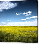 Pawnee Grasslands Canvas Print