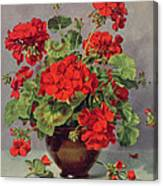 Geranium In An Earthenware Vase Canvas Print