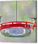 Peace At The Feeder Canvas Print
